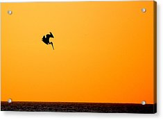 Pelican Diving At Sunset Acrylic Print