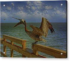 Pelican Eating Acrylic Print by J Riley Johnson