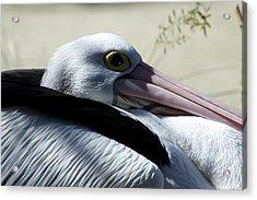 Pelican Eye Acrylic Print by Graham Palmer