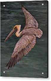 Pelican Fishing Acrylic Print