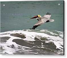 Pelican Flying Acrylic Print