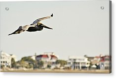 Pelican Flying Over Murrells Inlet Acrylic Print by Paulette Thomas