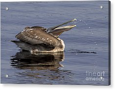 Pelican Fountain  Acrylic Print by Meg Rousher