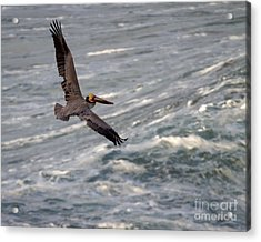 Acrylic Print featuring the photograph Pelican Glide by Dale Nelson