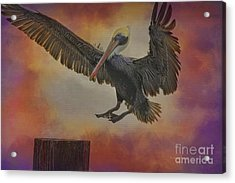 Pelican Grace Acrylic Print by Deborah Benoit