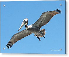 Pelican Landing On  Pier Acrylic Print by Tom Janca