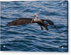 Acrylic Print featuring the photograph Pelican Landing by Sonny Marcyan