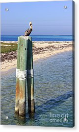 Pelican Lookout Acrylic Print by Alison Tomich