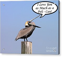 Pelican Love You Card Acrylic Print by Al Powell Photography USA