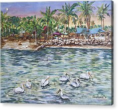 Pelican Medley Acrylic Print