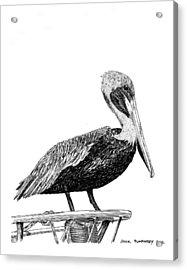 Monterey Pelican Acrylic Print