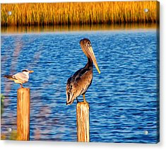 Pelican On A Pole Acrylic Print