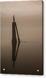 Pelican On A Stick Acrylic Print