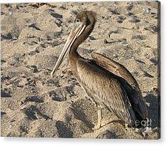 Pelican On Beach Acrylic Print by DejaVu Designs