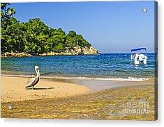 Pelican On Beach Acrylic Print by Elena Elisseeva