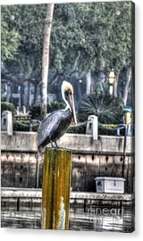 Pelican On Water Post Acrylic Print by Dan Friend