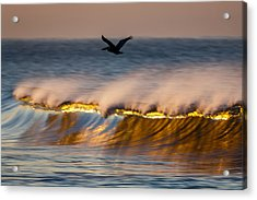 Pelican Over Wave  C6j9351 Acrylic Print by David Orias