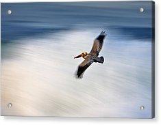 Pelican Over Wave  Mg_1212 Acrylic Print