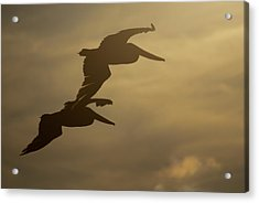 Acrylic Print featuring the photograph Pelican Pair by Erin Kohlenberg