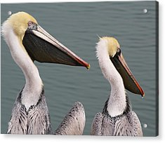 Pelican Pair Acrylic Print by Paulette Thomas