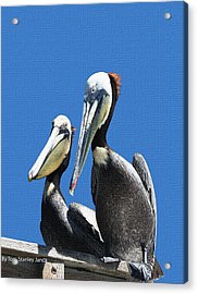 Acrylic Print featuring the photograph Pelican Pair by Tom Janca
