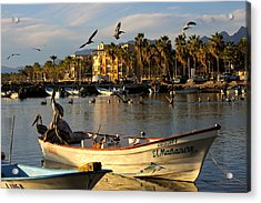 Acrylic Print featuring the photograph Pelican Panga by Kandy Hurley