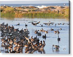 Acrylic Print featuring the photograph Pelican Party by Bob and Jan Shriner