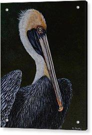 Pelican Posing Acrylic Print
