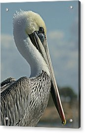 Pelican Profile 3 Acrylic Print by Ernie Echols