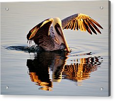 Pelican Reflection Acrylic Print by Paulette Thomas