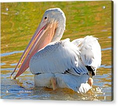 Acrylic Print featuring the photograph Pelican Sees Me by Lula Adams