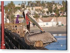 Pelican Sitting On Pier  Acrylic Print