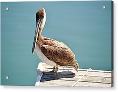 Pelican - Sitting On The Dock Of The Bay Acrylic Print by Paulette Thomas