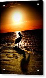 Pelican Sunrise Acrylic Print by Yew Kwang