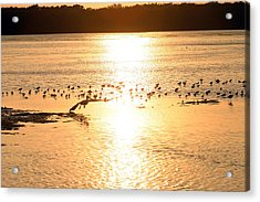 Pelican Sunset Acrylic Print by Mark Russell
