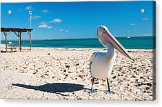 Acrylic Print featuring the photograph Pelican Under Blue Sky by Yew Kwang