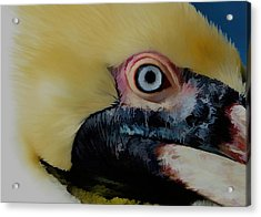 Acrylic Print featuring the photograph Pelican Up Close by Pamela Blizzard