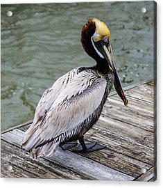 Acrylic Print featuring the photograph Pelican Watch by Gregg Southard