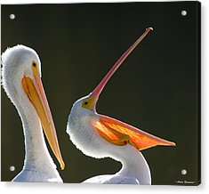 Acrylic Print featuring the photograph Pelican Yawn by Avian Resources