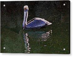 Pelican Zen Acrylic Print by Suzanne Stout