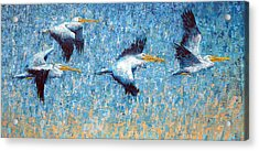 Pelicans 3 Acrylic Print by Ned Shuchter