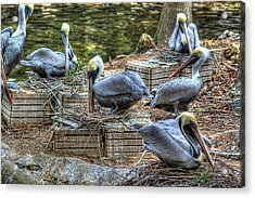 Pelicans By The Dock Acrylic Print by Donald Williams