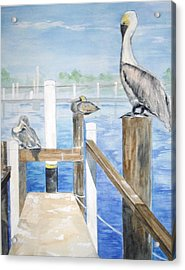 Pelicans Acrylic Print by Ellen Canfield