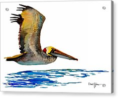 Da137 Pelican Over Water By Daniel Adams Acrylic Print