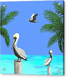 Pelicans In Meditation Acrylic Print by Amy Scholten
