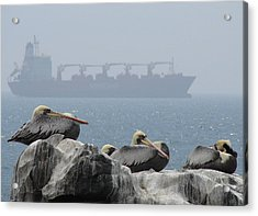 Acrylic Print featuring the photograph Pelicans In The Mist by Ramona Johnston