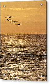 Pelicans Ocean And Sunsetting Acrylic Print by Tom Janca