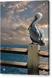 Pelicans Of Tampa Bay Acrylic Print