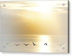 Pelicans Over Malibu Beach California Acrylic Print by Artist and Photographer Laura Wrede