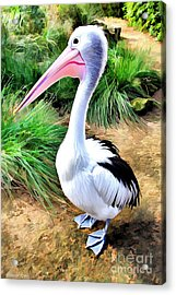 Pelicans Pride Acrylic Print by Shannon Rogers
